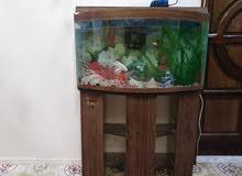 حوض سمك كامل اغراضه مع السمك