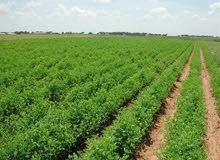 لوعايز تمتلك مزرعتك الخاصة او مزرعة دواجن او انتاج حيوانى  .....