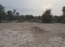 أرض زراعية مساحة عشرة آلاف متر العقدة شمال بها بئر مصرح
