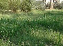 أرض زراعية للبيع مساحة 2دونم