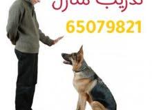 تدريب كلاب
