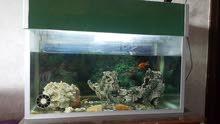 حوض سمك حجم كبير متر
