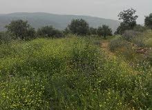 مزرعه زيتون غرب جرش تبعد عن عمان 43 كم تربه حمراء كامل القطعه 15الف