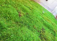 يوجد لدينا عشب طبيعي واشجار وتنسيق الجنانات  وعمل شلالات  بي ارخص السعار