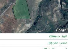 قطعة ارض للبيع بسعر مغري جدا من أراضي جرش بلدة جبه