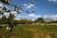 قطعة ارض 4 دونمات في السلط ام العمد تصلح لمزرعة ملوكيه