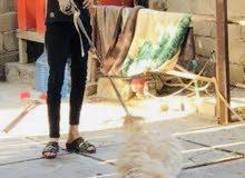 كلب تيرير لونج هير حجم كبير اسمه سمسم السعر 200