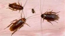 شركة تنظيف ومكافحة الحشرات خدمه 24ساعه