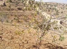 مزرعه مميزه بين شاليهات ومزارع في جرش