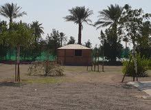 للبيع مزرعه عائلية في مدينة الذيد