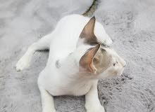 قطط للتبني cats for adoption