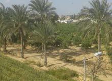 مزرعة 13فدان للبيع مدينة النوبارية قرية طة حسين 01116023909