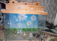 حوض سمك كبير ومعاه صخور وقواقع ومتور ونفوره صغيره