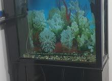 حوض اسماك عرضه متر