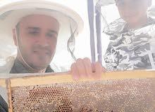عسل طبيعي عماني مضمون من مناحل السمو