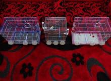 3 طيور كناري صفاره ميوزك للبيع أو الأستبدال