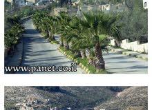 أراضي في الضفة الغربية  بيت امرين نابلس