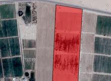 ارض للبيع وادي رم الديسه 40 دونم