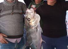 لكل من يهوى الصيد شركة Trust Marine Company تقدم