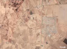 ارض زراعية المساحة 2.1150 هكتار