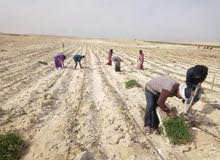 ارض مستصلحة بالكامل وجاهزة للزراعة علي طريق مصر الفيوم بسعر يبدأ من20 الف جنيه للفدان