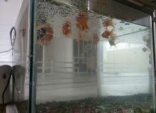 fish with tang and air filter ...