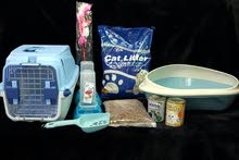cat accessories full set