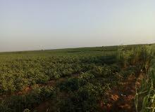 ارض مسجه في ريف الفيوم بسعر مغري