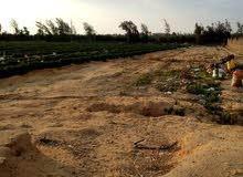 ارض زراعيه بها جميع المرافق للبيع في محافظه الفيوم