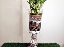 Handcrafted Glass vase with lucky bamboo plant