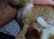 قطط متربايات بالبيت
