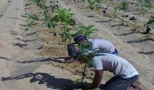 25فدان زراعيه واستثماري وقابله للتجزئه وحتي 5 فدان والري نيلي