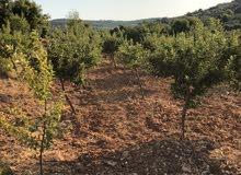 مزرعه روعه 4181  متر مربع مزروعه تفاح و زيتون من المالك مباشره بدون اي عمولات شامل التسجيل .....