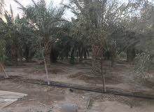 مزرعه للبيع في عسفان في الشاميه