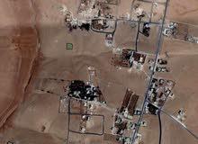 الجيزه 865م ارينبه الغربيه جنوب عمان