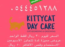 فندق كيتي كات لرعاية القطط مدينة المجمعة