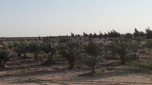 قطعه ارض زراعية مستصلحة بجوار شركة  سيكم و رويال و جهينة  طبقا لقانون 144 لسنة 2