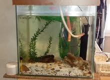 حوض سمك كبير يرفع 140 لتر زجاج 10ملي بملحقاته للبيع