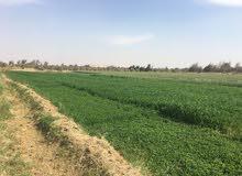 (هذا العقار بمصر )90فدان مستصلحة وجاهزة عالزراعة قابلة للتجزئة
