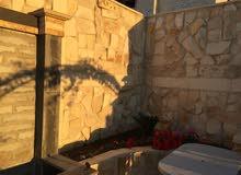 Luxurious 691 sqm Villa for sale in AmmanAl Urdon Street