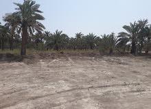 دوانم طابو زراعي عراقي في ابو الخصيب في منطقة السبيليات