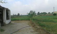 مزرعه للبيع في طريق مصر اسكندريه الصحراوي