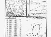 ارض سكنية للبيع في شناص
