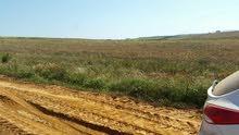 ارض رملية صالحة لزراعة الفرولة terrain pour culture de fraise