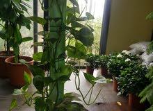 نباتات ظل ونباتات جميلة للحدائق والفلل