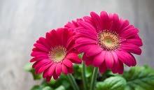 مطلوب منسق أزهار