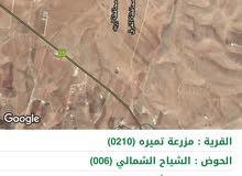 ارض غير مفروزة للبيع قرية مزرعة تميرا ، حوض الشياح الشمالي