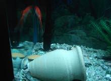 حوض سمك اجنبي بسعر مغري جداا