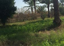 بستان لليجار  بسعر مناسب في بغداد