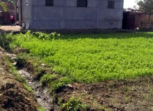 قطعة ارض 13 قيرط ، زرعيه ومباني